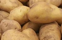 安徽宿州特产:永安土豆