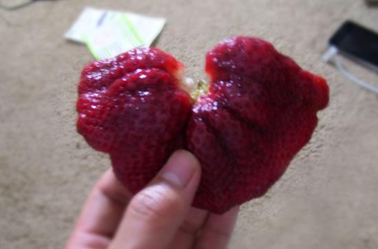 变异蔬菜和畸形水果能吃吗 变异蔬菜会致癌吗 畸形果蔬图集欣赏