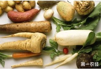 常见的根茎类蔬菜有哪些?吃胡萝卜等根茎类蔬
