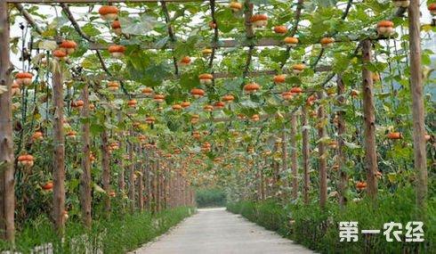 广东惠州:汝湖将建5000亩现代农业观光园项目