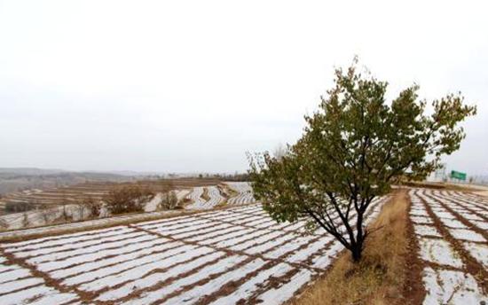 青海民和:计划推广40万亩全膜栽培技术