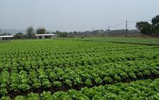 <b>江苏扬州槐泗镇拟投10亿元建蔬菜基地</b>