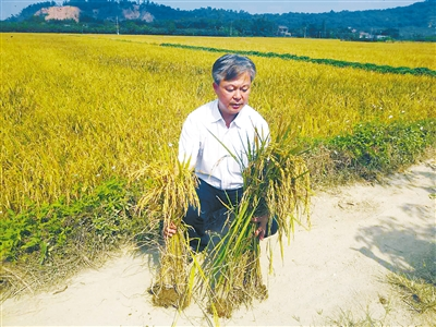 <b>广东:珠海开展超声波处理稻种水稻生产对比验证工作</b>