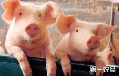 猪睡觉鼻涕泡可爱图片