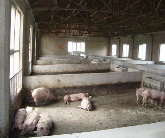 赚钱又环保 小型养猪场设计图