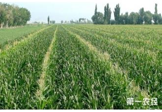 【土壤改良】玉米土壤耕层改良高产技术
