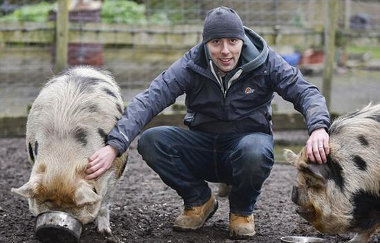 宠物猪可上街散步? 英国新政:需申请特别许可证