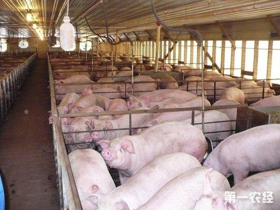 (2)猪舍建筑群的规划应结合当地气候及地理条件