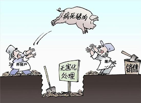 警惕 喂鱼病死猪肉流入玉林市场 死猪肉对人体危害大