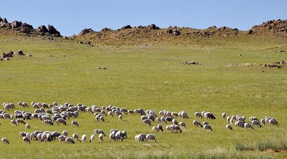 宁夏实施草原生态保护补助奖励政策 每年每亩7.5元