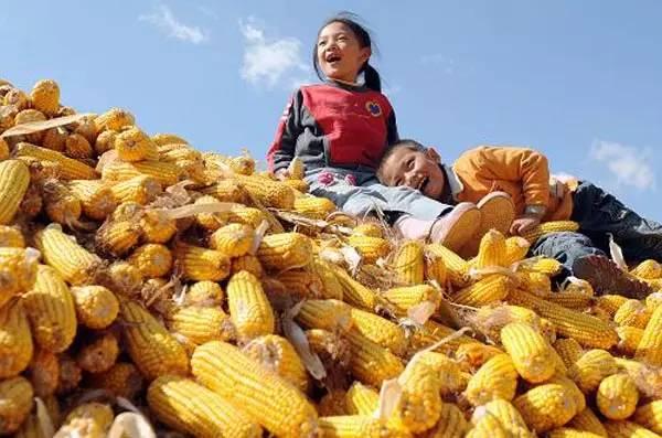 """如何改变农民农产品""""靠天收""""这一现状?"""