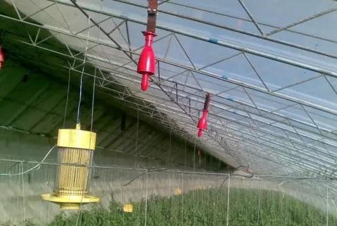 六大措施助设施蔬菜生产抗雾霾天气