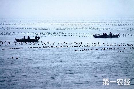 广东将全面启动美丽海洋生态文明建设工程