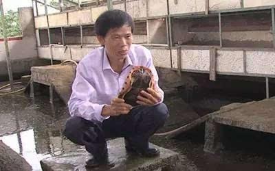 年入2千万 揭秘龟痴陈明球养殖致富经