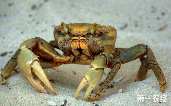 螃蟹吃什么食物