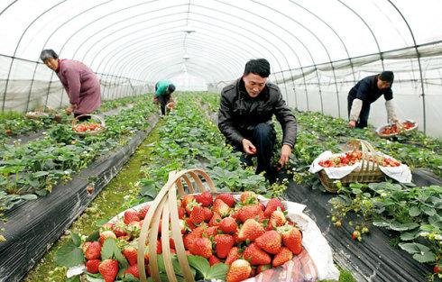 <b>江西:带动全省家庭农场进入市场 推动有机生态农业升级</b>