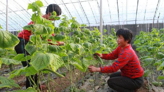 安徽宿州:农业产业化联合体已有203个 年产值达200多亿元