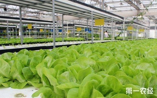 广西农垦管区开展科技兴农 促进了农业转型升级
