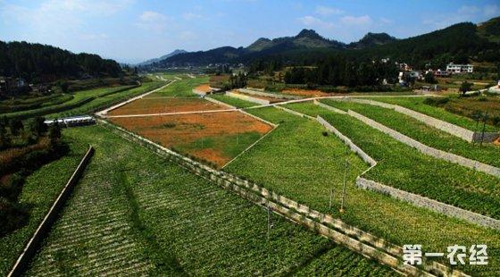 湖北沙洋县:共筹3.8亿元将建设高标准农田13.6万亩