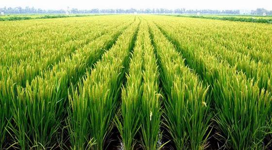 我国富硒食品农业产业发展急需制订国家行业标准