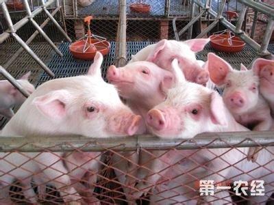 中小型养猪场如何管理? 管理者日常工作内容