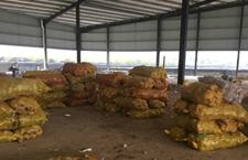 夫妻借款15万做生意60吨土豆滞销 爱心人士接力购买土豆