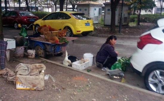"""上海:""""地下活禽摊点""""隐蔽 蔬菜店隐蔽卖活鸡"""