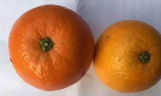 银川:市场发现染色橙子 染色后封蜡不易掉色