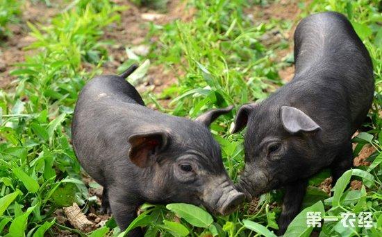 新建养猪场需要申办什么手续?