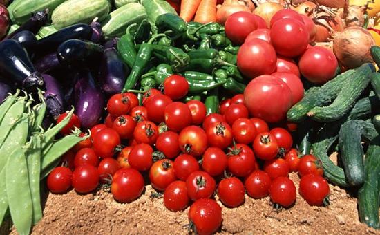 宁夏:全区蔬菜种植面积307.5万亩 产值超100亿元