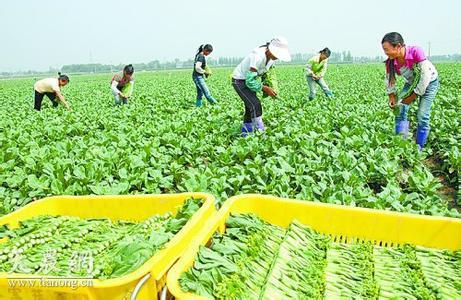 广东:培育新型农业经营主体推进农业供给侧结构性改革