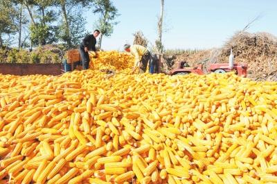 山西:2016年粮食总产量增产6.2% 单产创历史最好水平