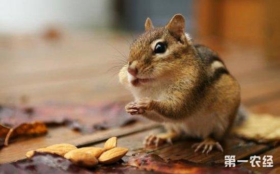 松鼠冬眠吗 冬眠的动物都有哪些