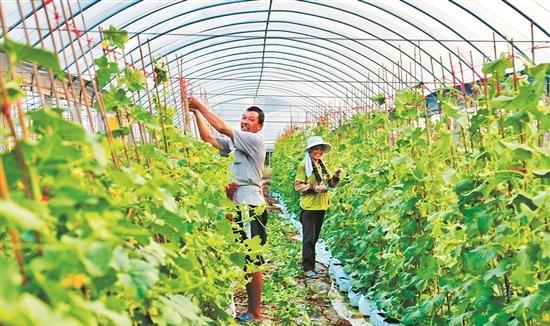 <b>福建晋江农业嘉年华今日开幕 为期20多天农业狂欢节</b>