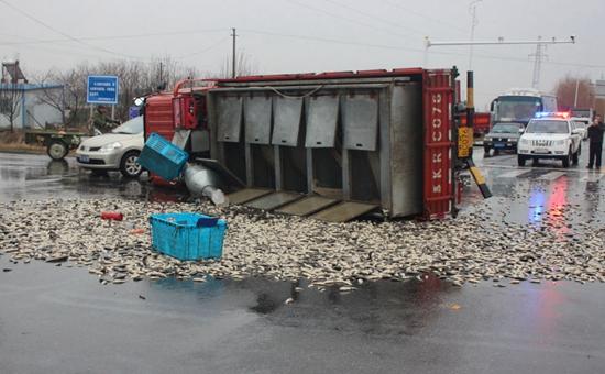 江苏高邮:运鱼车侧翻一千多斤鲫鱼被抛马路