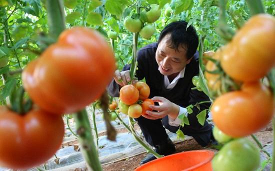 山西阳城:预计销售无公害蔬菜2.675万吨 增收1.5亿元