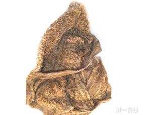 青海省海南特产:鹿胃(图片)