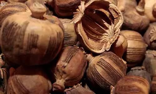 永州:米粉店被查用罂粟壳熬制卤水 被判6个月