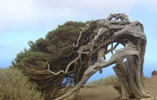 各种奇葩树木图片欣赏,有的怪树还耍流氓臭不要脸!