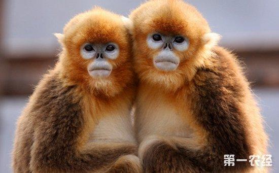 中国十大濒危野生动物