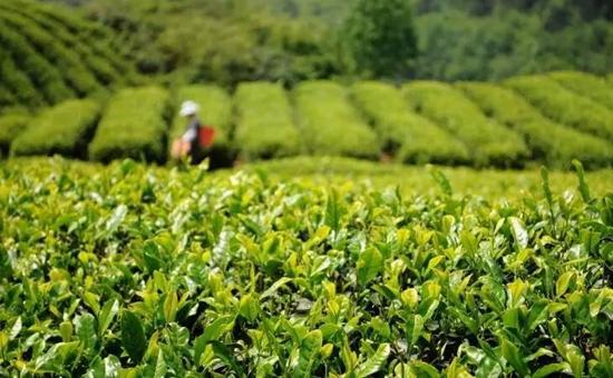农业部:部署2017年农业农村经济重点任务