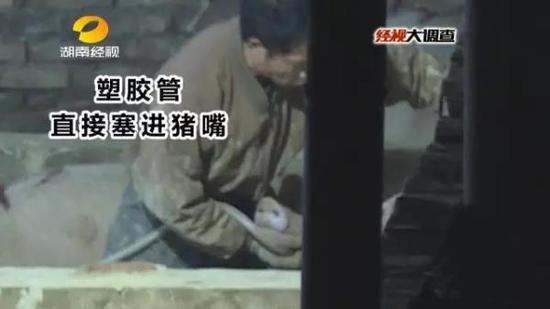 湖南:强行给生猪灌食泥浆 一头猪可增重20斤