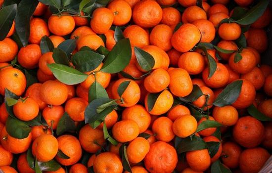 大庆:用普通橘子冒充砂糖橘 如何分辨?