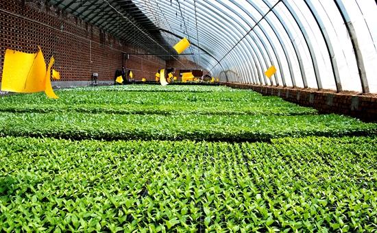 内蒙古:筹建精准扶贫产业基地 智慧农业促农增收
