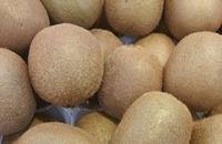 奉新猕猴桃 江西宜春知名特产水果
