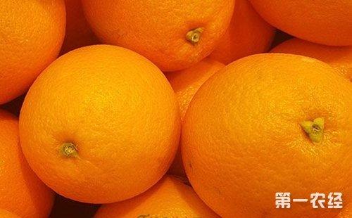 湖南省邵阳市新宁县特产:崀山脐橙