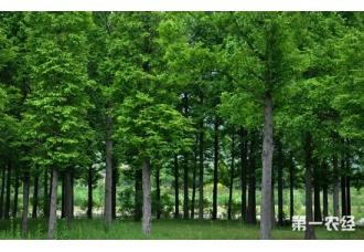 国家林业局公布2016年林业发展状况 预测2017年林业产值