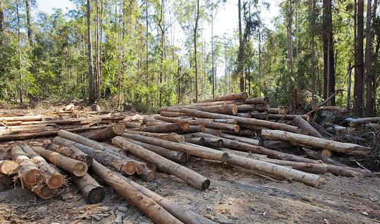 广西:拨付3亿多天然林保护工程补助经费停止天然林商业性采伐