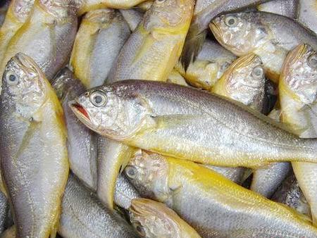 <b>重庆:华润万家超市鲜黄花鱼检出违禁甲硝唑</b>