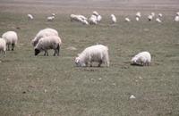 青海天峻县特产:藏西羊毛